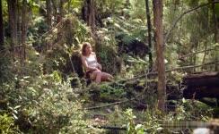Forest spring